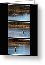 Fly Fishing Triptych Black Background Greeting Card