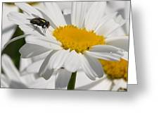 Fly In The Flower Greeting Card