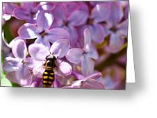 Fly In The Lilacs Greeting Card