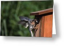 Fly Through Greeting Card