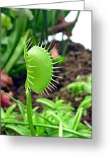 Fly Trap Greeting Card