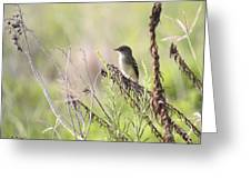 Flycatcher On A Twig Greeting Card