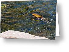 Flying Brook Trout Greeting Card