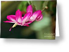 Flying Cactus Flower Greeting Card