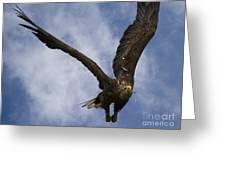 Flying European Sea Eagle I Greeting Card
