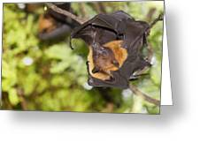 Flying Foxes Greeting Card by Anek Suwannaphoom