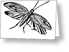 Flying Insect Greeting Card
