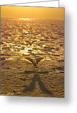 Flying Over Icy Waters Greeting Card