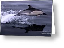 Flying Porpoise Greeting Card
