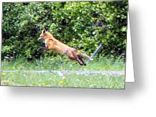 Flying Red Fox Greeting Card by Mark Haley