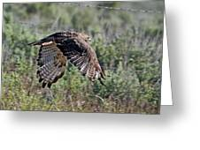 Flying Redtail Hawk  Greeting Card