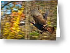 Flying Wild Turkey Escapes Thanksgiving Greeting Card