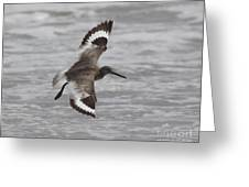 Flying Willet Greeting Card by Chris Hill