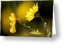 Focos De Luz Greeting Card
