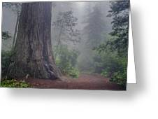 Fog And Redwoods Greeting Card