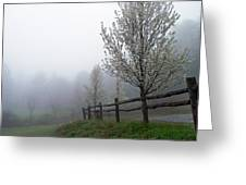 Foggy Trees In The Valley Greeting Card