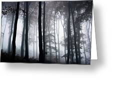 Foggy Woods Ireland Greeting Card