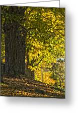 Foliage At The Cemetery Greeting Card