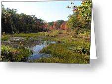 foliage in the swamp lands of CT Greeting Card