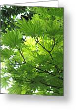 Foliage Tree Greeting Card