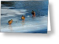 Follow The Leader Duck Style Greeting Card