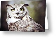 Followed Owl Greeting Card