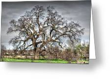 Folsom Oak Tree Greeting Card