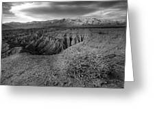 Font's Point Bush   Black And White Greeting Card