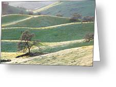 Foothills In Flowers Greeting Card