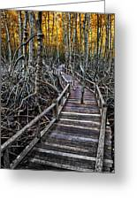 Footpath In Mangrove Forest Greeting Card