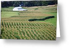 For Amber Waves Of Grain Greeting Card