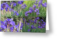 for Iris Greeting Card