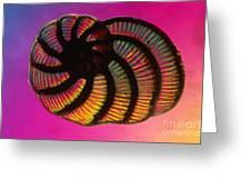 Foraminifer Greeting Card by Eric V. Grave