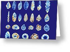 Foraminiferans, Light Micrograp Greeting Card by Pasieka