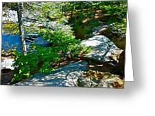 Forest And Stream 2 Greeting Card