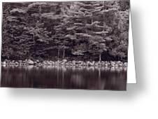 Forest At Jordan Pond Acadia Bw Greeting Card