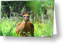 Forest Buck Greeting Card