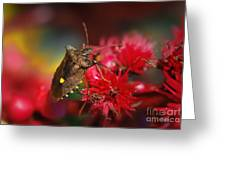 Forest Bug - Pentatoma Rufipes Greeting Card
