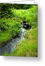 Forest Creek In Newfoundland Greeting Card