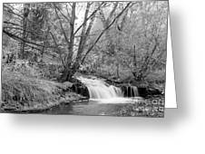 Forest Creek Waterfall In Black And White Greeting Card