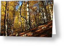 Forest Fall Colors 4 Greeting Card