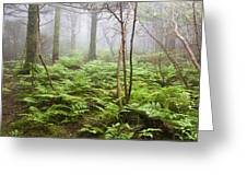 Forest Ferns On A Foggy Morning Greeting Card