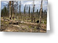 Forest Fire Aftermath Greeting Card