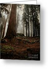 Forest Floor And Fog Greeting Card