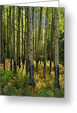 Forest Floor In Autumn, Bow Valley Greeting Card