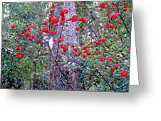 Forest Flowers Bhuping Palace Greeting Card