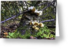 Forest Fungi Greeting Card