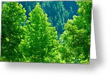 Forest Illuminates In The Sunlight  Greeting Card