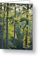 Forest Illumination At Sunset Greeting Card