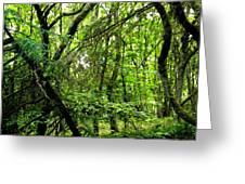 Forest In Denmark Greeting Card